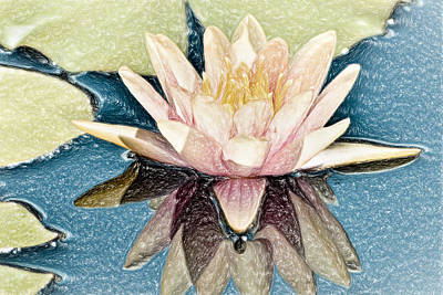 Lilies Mixed Media - Abigails Water Lily by Trish Tritz