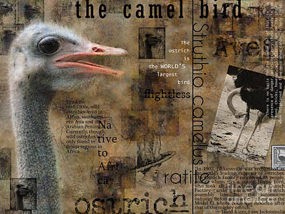 Digital Art - About The Ostrich by Nola Lee Kelsey