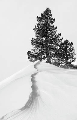 Winter Trees Photograph - About The Snow And Forms by Rodrigo N??ez Buj