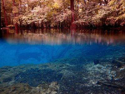 Photograph - Above And Below Manatee Springs 1 by Sheri McLeroy
