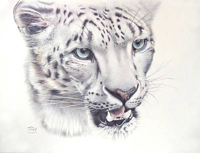 Endangered Drawing - Above The Clouds - Snow Leopard by Jill Parry