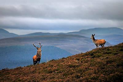 Photograph - Above The Glen by Gavin Macrae