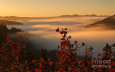 Photograph - Above The Mists by Idaho Scenic Images Linda Lantzy