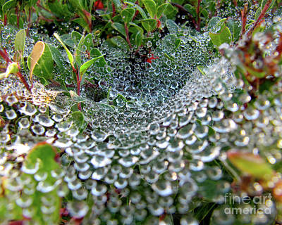 Black Photograph - Above The Web by CML Brown