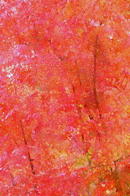 Pistache Tree Photograph - Abstract 292 by Pamela Cooper