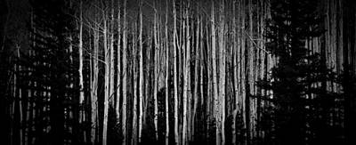 Photograph - Abstract Aspens by Atom Crawford