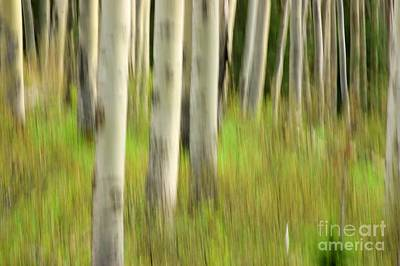 Photograph - Abstract Aspens 2 by David Birchall
