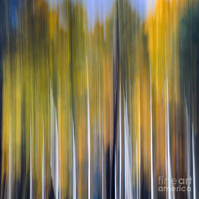Photograph - Abstract Aspens by Tamara Becker