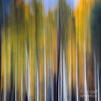 Photograph - Abstract Aspens by Tamara Becker