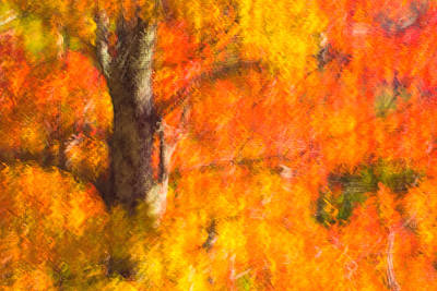 Photograph - Abstract Autumn by Joan Herwig