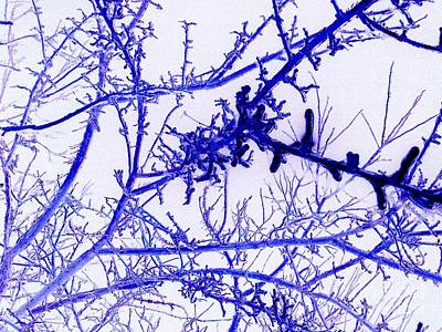 Abstract Blue Iced Branches Print by Minding My  Visions by Adri and Ray