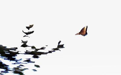 Photograph - Abstract Butterflies by Diannah Lynch