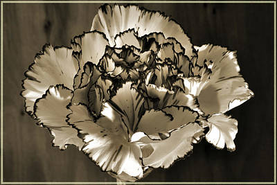 Photograph - Abstract Carnation by Terence Davis