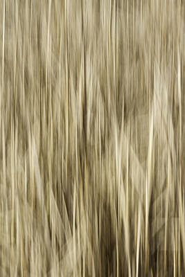 Abstract Cattails Art Print by Thomas Young