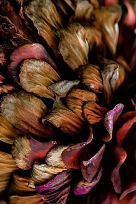 Garden Fruits - Abstract Color by Edgar Laureano