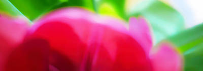 Photograph - Abstract Colors Of Spring by Menega Sabidussi