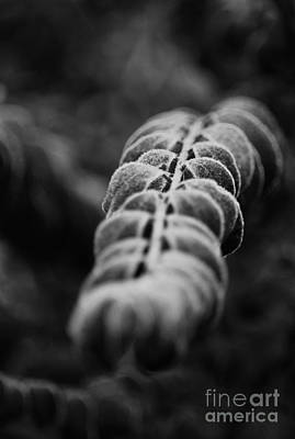 Photograph - Abstract Dark Frost by Maria Urso