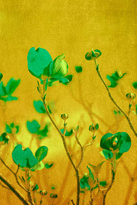 Yellow Flower Photograph - Abstract Dogwood by Bonnie Bruno