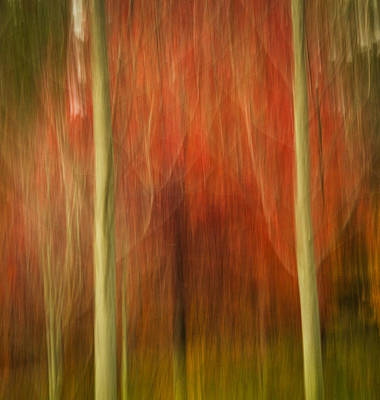 Photograph - Abstract Fall 14 by Joye Ardyn Durham