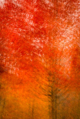 Photograph - Abstract Fall 18 by Joye Ardyn Durham