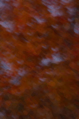 Photograph - Abstract Fall Colors by Haren Images- Kriss Haren