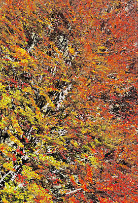 Abstract Fall Art Print