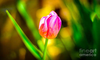 Photograph - Abstract Flower by David Warrington