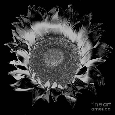 Photograph - Abstract Flower In Black And White by Merton Allen
