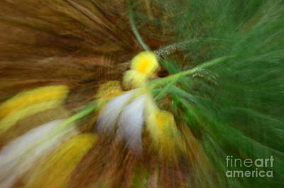 Photograph - Abstract Flower by Randy J Heath