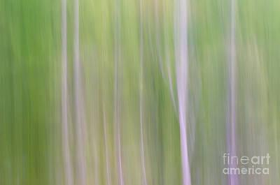 Photograph - Abstract Forest by Tamara Becker