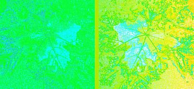 Maple Leaf Art Digital Art - Abstract Fusion 249 by Will Borden