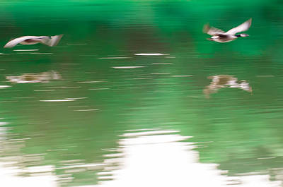 Photograph - Abstract Geese Flying Overk Water Of Lake by Alex Grichenko