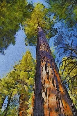 Abstract Giant Sequoia Art Print by Barbara Snyder