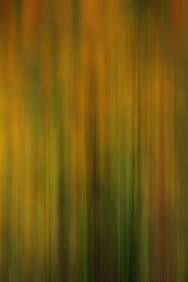 Photograph - Abstract In Yellow And Green by TL  Mair