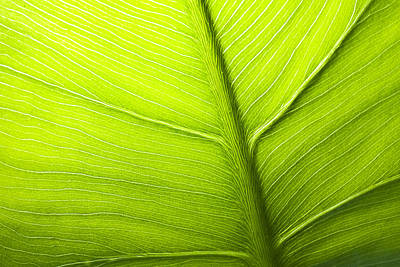 Photograph - Abstract Leaf by Bob Decker