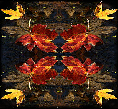 Photograph - Abstract Leaf by Richard Engelbrecht