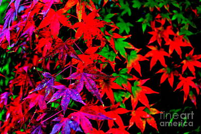 Abstract Leaves Art Print by Jay Nodianos