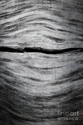 Photograph - Abstract Log by Tamara Becker