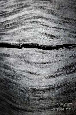 Photograph - Abstract Log by Tamara Becker