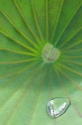 Photograph - Abstract Lotus Lily Leaf by David Clode