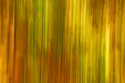 Forerst Photograph - Abstract Nature Background by Gry Thunes
