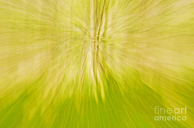 Forerst Photograph - Abstract Nature  by Gry Thunes
