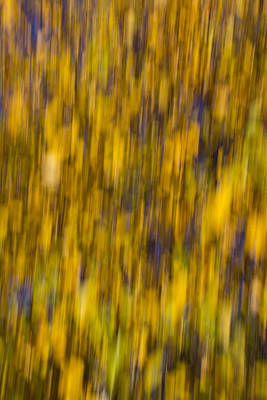 Photograph - Abstract Of Autumn Gold by David Pyatt