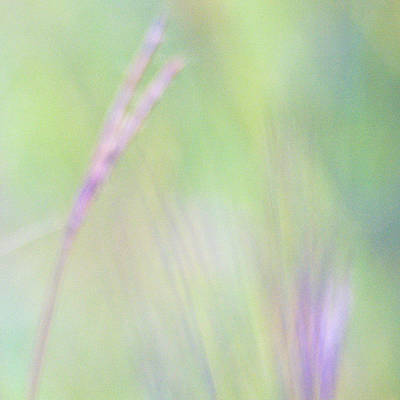 Adjectives Photograph - Abstract Of Big Bluestem Grasses by Dennis Fast / Vwpics