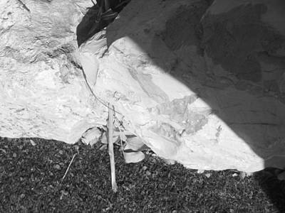 Photograph - Abstract Of Rock And Shadow by Esther Newman-Cohen