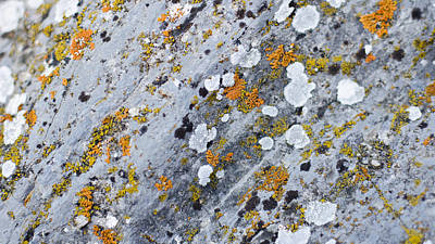 Abstract Orange Lichen 2 Art Print by Chase Taylor