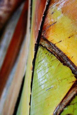 Photograph - Abstract Palm 2 by Heather Green