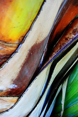 Photograph - Abstract Palm 3 by Heather Green