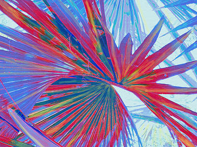 Digital Art - Abstract Palm by Jane Schnetlage