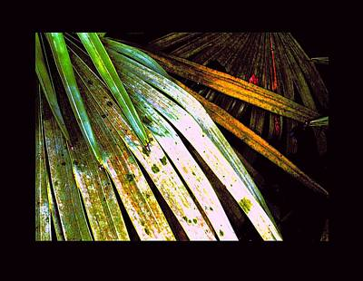 Photograph - Abstract Palms by Richard Erickson